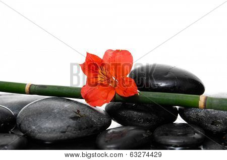 zen basalt stones and red flower
