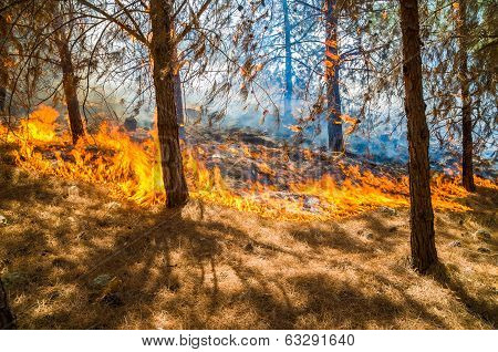 Forest Burning