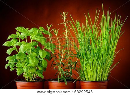 Basil, Rosemary And Chives