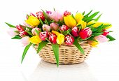 Spring Tulips In Wooden Basket, On White Background. Happy Mothers Day, Romantic Still Life, Fresh F