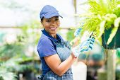 smiling african american female gardener pruning a plant in greenhouse