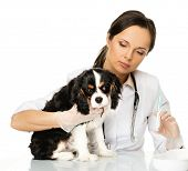 Young brunette veterinary woman with spaniel holding syringe