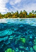 Beautiful marine life, abstract natural background, gorgeous coral garden underwater, tropical islan