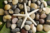 picture of echinoderms  - starfish on colorful stones texture on green leaf - JPG