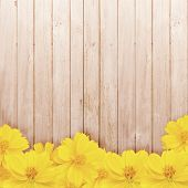 foto of zinnias  - Yellow zinnia flower on wooden brown wall - JPG