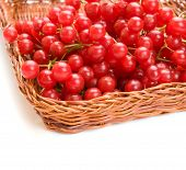 Fresh cranberries in basket isolated on white background