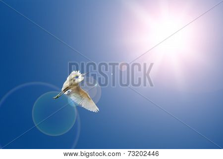 Flying birds on blue sky and sun light