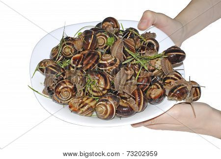 Snails On Plate