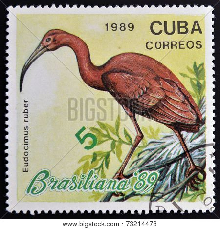 CUBA - CIRCA 1989: A stamp printed in the Cuba shows the exotic bird Eudocimus rober circa 1989