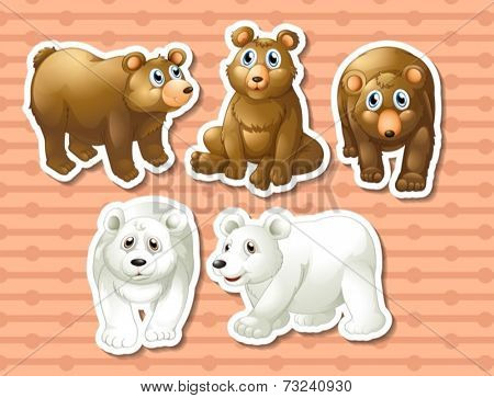 Illustration of different kind of bears