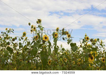 Prairie In Bloom