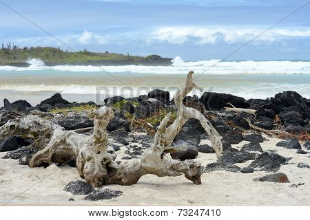 Tortuga Bay, Santa Cruz, Galapagos, Ecuador