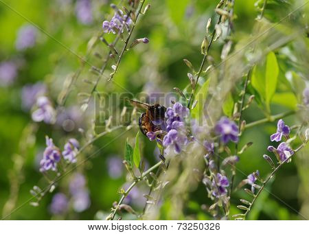 Garden Scene - Black Beetle