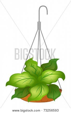 Illustration of a hanging pot with green leafy plant on a white background