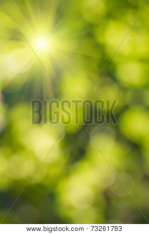 Natural  Blurred Background