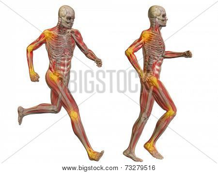 3D human or man with muscles for anatomy or health designs with articular or bones pain. A male isolated on white background