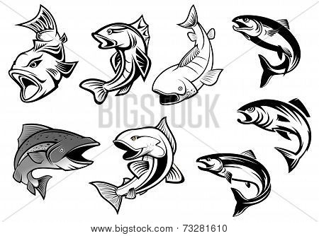 Cartoon salmons fish set