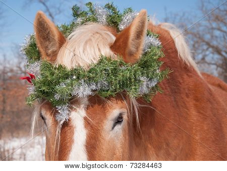 Horse wearing a Christmas wreath over his ears, looking at the viewer