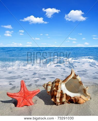 Conch shell with starfish on beach