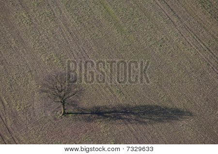 Aerial of a single tree