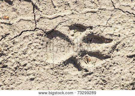 Closeup Of Dog Paw Print On Dry Cracked Ground