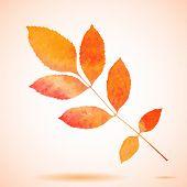 stock photo of ash-tree  - Orange watercolor painted vector ash tree leaf - JPG