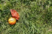 picture of netball  - Orange basketball on green grass in autumn - JPG