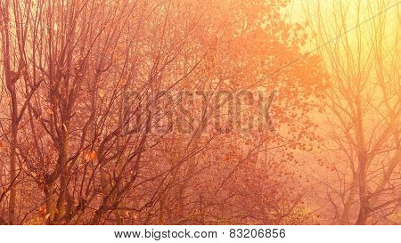 Bright Autumn Leaves Fall Trees In Forest