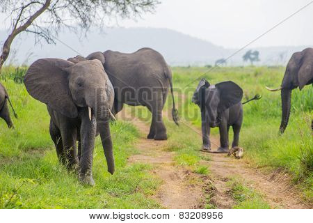 Family Of Elephants With A Baby