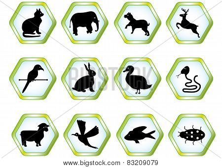 Set animals