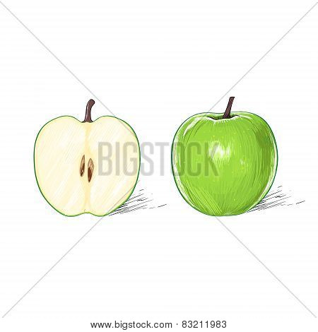 green apple with cut half sketch draw isolated over