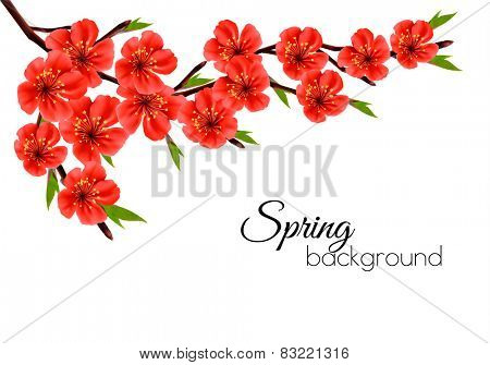 Spring background with blossom brunch of red flowers. Vector