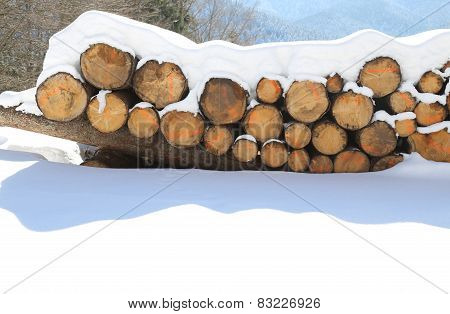 Pile Of Logs Cut In The Mountains