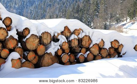 Logs Cut In The Mountains Under The White Snow