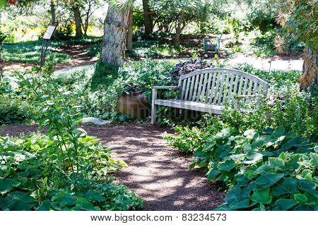Wood Bench Along Garden Path