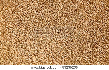 Wheat Pile Background