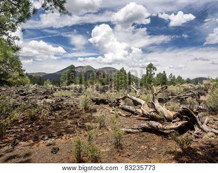 Sunset Crater Volcano National Monument Lava Flow