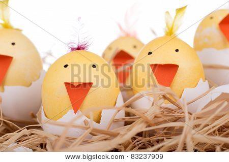 Easter Egg Chicks Closeup