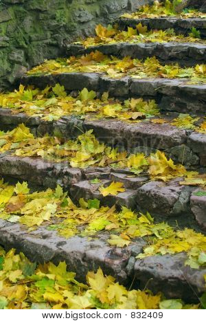 Stairs with foliage
