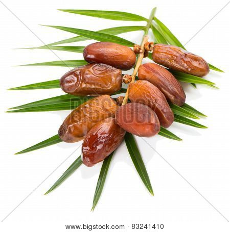 Date Fruits And Leaf Of Palm