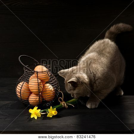 Easter Themed Cat Photo.