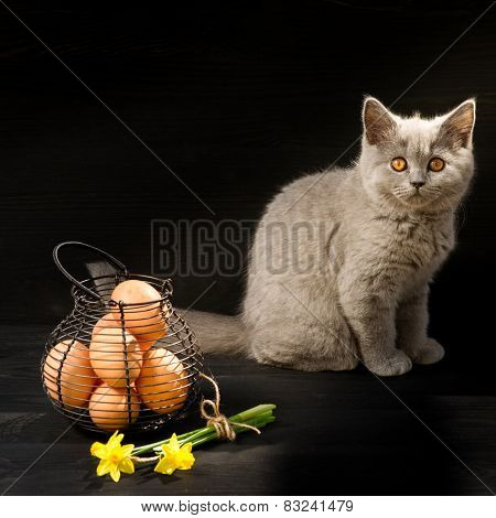 Cat Sitting With Easter Eggs And Flowers.