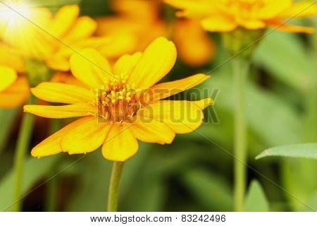 Spring Beautiful Yellow Flowers
