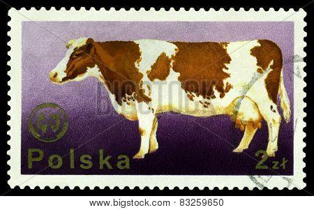 Vintage  Postage Stamp. Cow.1.
