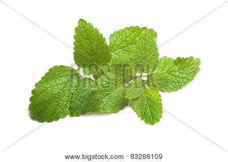 fresh green leaf of melissa isolated on white background