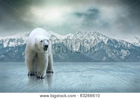 White polar bear on the ice