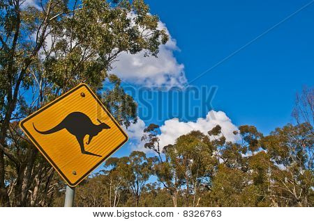 Beware of Kangaroos