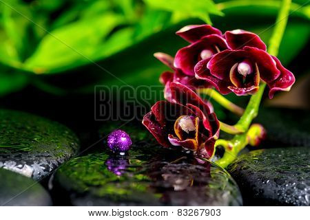 Beautiful Spa Background Of Dark Cherry Flower Orchid Phalaenopsis, Zen Basalt Stones With Drops And