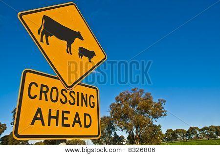 Sheep & Cattle Crossing Warning Sign in the Australian Bush