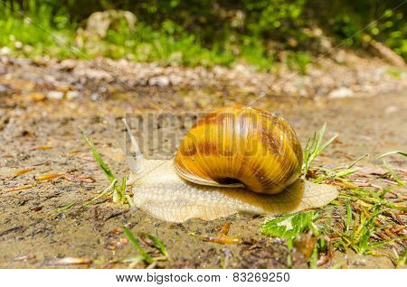 Snail on a meadow after rain